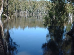 High water from Murray River